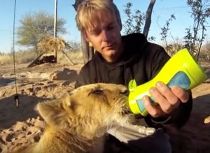 Lion Baby is feed with iiamo baby bottle